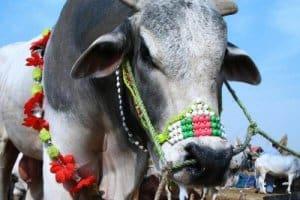 AQF_Bangladesh Eid al-Adha holidays